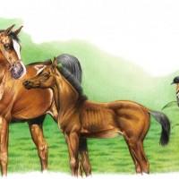 Иллюстратор Александр Николаевич Сичкарь - фото 1265377468_12042008100144-200x200, главная Фото , конный журнал EquiLIfe