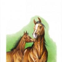 Иллюстратор Александр Николаевич Сичкарь - фото 1265377520_12042008094151-200x200, главная Фото , конный журнал EquiLIfe