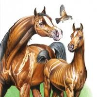 Иллюстратор Александр Николаевич Сичкарь - фото 1265377534_12042008094425-200x200, главная Фото , конный журнал EquiLIfe