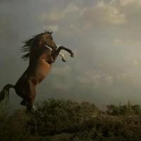 Фотограф Войтек Квятковский (Wojtek Kwiatkowski) - фото 15440613-md-200x200, главная Фото , конный журнал EquiLIfe