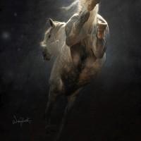 Фотограф Войтек Квятковский (Wojtek Kwiatkowski) - фото 15464749-lg-200x200, главная Фото , конный журнал EquiLIfe