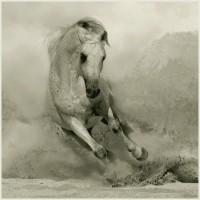 Фотограф Войтек Квятковский (Wojtek Kwiatkowski) - фото 5360956-lg-200x200, главная Фото , конный журнал EquiLIfe