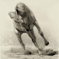 Фотограф Войтек Квятковский (Wojtek Kwiatkowski) - фото 5785216-lg-200x200, главная Фото , конный журнал EquiLIfe