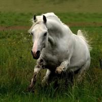 Фотограф Войтек Квятковский (Wojtek Kwiatkowski) - фото 62051037_9909273md-200x200, главная Фото , конный журнал EquiLIfe