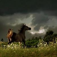 Фотограф Войтек Квятковский (Wojtek Kwiatkowski) - фото 62051287_9635013md-200x200, главная Фото , конный журнал EquiLIfe