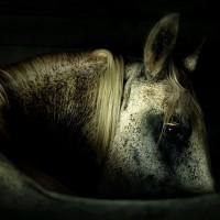 Фотограф Войтек Квятковский (Wojtek Kwiatkowski) - фото 62051363_9531665md-200x200, главная Фото , конный журнал EquiLIfe