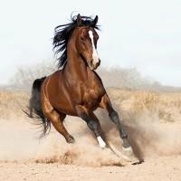 Фотограф Войтек Квятковский (Wojtek Kwiatkowski) - фото 6340066-lg-200x200, главная Фото , конный журнал EquiLIfe