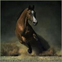 Фотограф Войтек Квятковский (Wojtek Kwiatkowski) - фото 7193139-md-200x200, главная Фото , конный журнал EquiLIfe