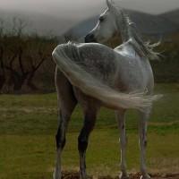 Фотограф Войтек Квятковский (Wojtek Kwiatkowski) - фото 7fb7d0a2c514-200x200, главная Фото , конный журнал EquiLIfe