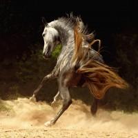 Фотограф Войтек Квятковский (Wojtek Kwiatkowski) - фото 9835537-md-200x200, главная Фото , конный журнал EquiLIfe