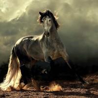 Фотограф Войтек Квятковский (Wojtek Kwiatkowski) - фото Arab_1-200x200, главная Фото , конный журнал EquiLIfe