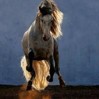 Фотограф Войтек Квятковский (Wojtek Kwiatkowski) - фото Arab_12-200x200, главная Фото , конный журнал EquiLIfe