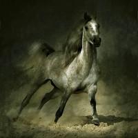 Фотограф Войтек Квятковский (Wojtek Kwiatkowski) - фото Arab_15-200x200, главная Фото , конный журнал EquiLIfe