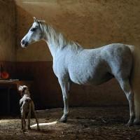Фотограф Войтек Квятковский (Wojtek Kwiatkowski) - фото Arab_16-200x200, главная Фото , конный журнал EquiLIfe