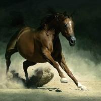Фотограф Войтек Квятковский (Wojtek Kwiatkowski) - фото Arab_23-200x200, главная Фото , конный журнал EquiLIfe