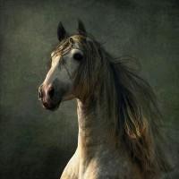 Фотограф Войтек Квятковский (Wojtek Kwiatkowski) - фото Arab_5-200x200, главная Фото , конный журнал EquiLIfe