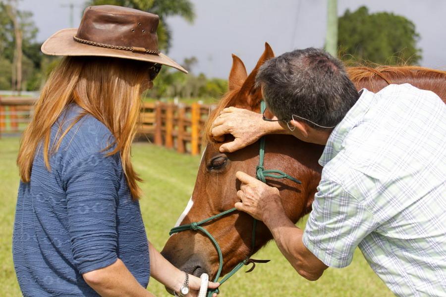 Подготовка лошади к соревнованиям по дистанционным конным пробегам - фото Vet-check-Maya, главная Разное Тренинг , конный журнал EquiLIfe
