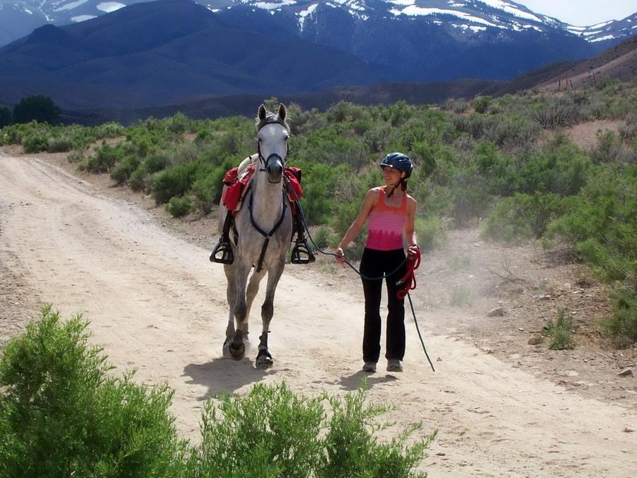 Пробеги. Проходим ветеринарный контроль - фото bing_com, главная Разное Тренинг , конный журнал EquiLIfe
