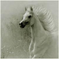 Фотограф Войтек Квятковский (Wojtek Kwiatkowski) - фото dc0adedd9fdf-200x200, главная Фото , конный журнал EquiLIfe