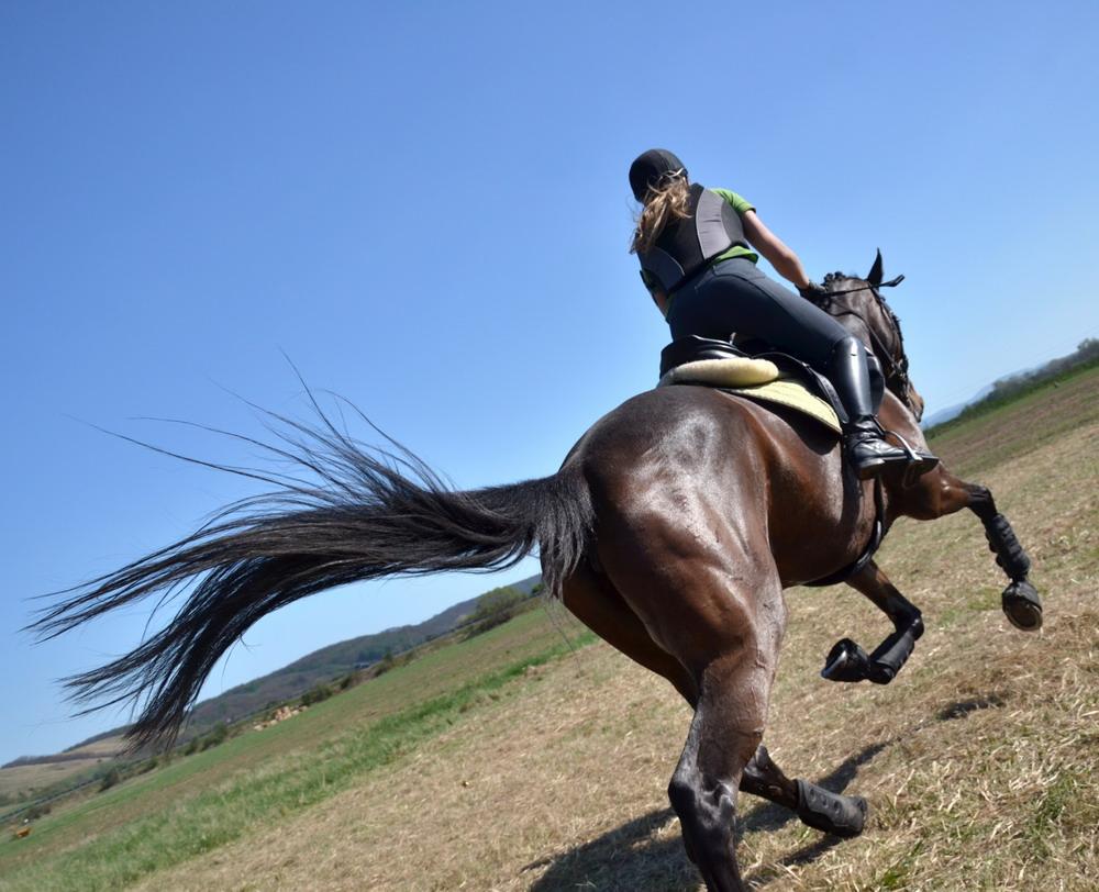 Что же нужно, чтобы навык уступки работал и не изчез со временем? - фото gallop_shutterstock_101289706, главная Поведение лошади Тренинг , конный журнал EquiLIfe