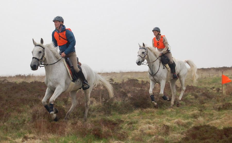 Подготовка лошади к соревнованиям по дистанционным конным пробегам - фото horsebitsmagazine_com, главная Разное Тренинг , конный журнал EquiLIfe