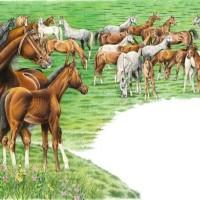 Иллюстратор Александр Николаевич Сичкарь - фото i-200x200, главная Фото , конный журнал EquiLIfe