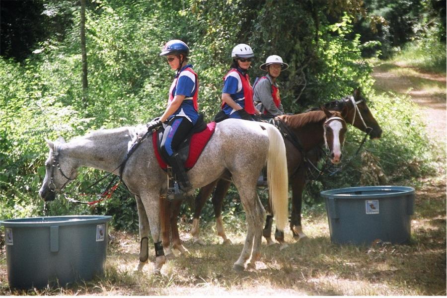 Пробеги. Проходим ветеринарный контроль - фото maryvalleycountry_com, главная Разное Тренинг , конный журнал EquiLIfe