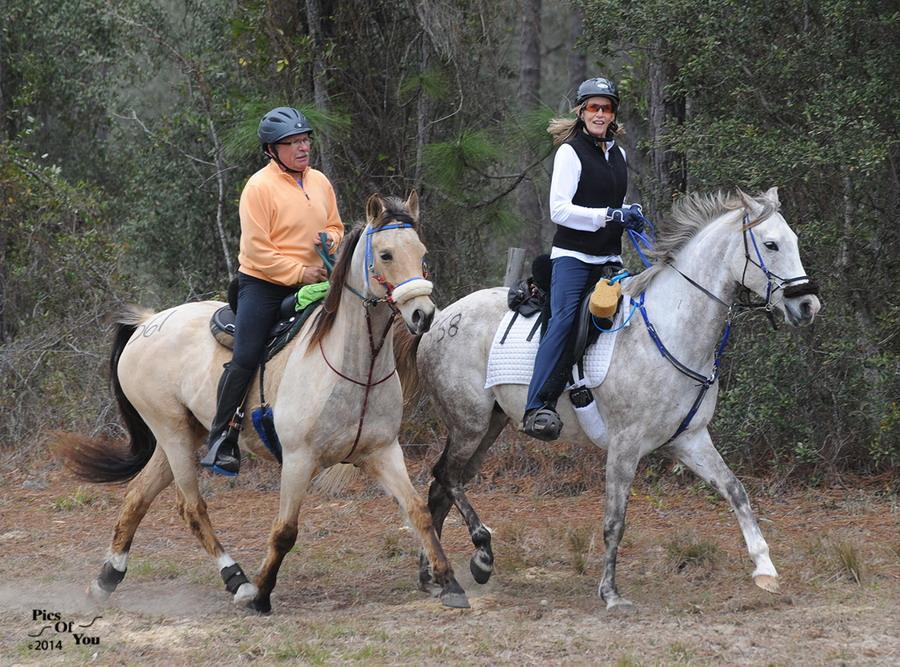 Начальная подготовка лошади к дистанционным  конным пробегам - фото picsofyou_wordpress_com, главная Разное Тренинг , конный журнал EquiLIfe