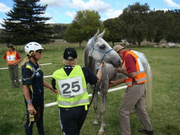 Пробеги. Проходим ветеринарный контроль - фото vetting, главная Разное Тренинг , конный журнал EquiLIfe