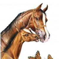 Иллюстратор Александр Николаевич Сичкарь - фото y_23c8b87d-200x200, главная Фото , конный журнал EquiLIfe