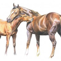 Иллюстратор Александр Николаевич Сичкарь - фото y_f05f8fa6-200x200, главная Фото , конный журнал EquiLIfe