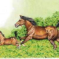 Иллюстратор Александр Николаевич Сичкарь - фото z_1595e91d-200x200, главная Фото , конный журнал EquiLIfe