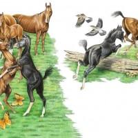 Иллюстратор Александр Николаевич Сичкарь - фото z_4cb25a50-200x200, главная Фото , конный журнал EquiLIfe