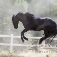 Кристиане Славик (Christiane Slawik)  - фото 11986984_1050333485000395_1684744767953683530_n-200x200, главная Фото , конный журнал EquiLIfe