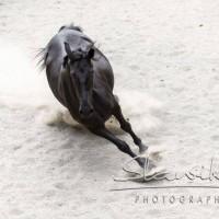 Кристиане Славик (Christiane Slawik)  - фото 12472669_1116388861728190_7844753690740452378_n-200x200, главная Фото , конный журнал EquiLIfe