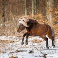 Кристиане Славик (Christiane Slawik)  - фото 12472694_1121219554578454_1878988156522216733_n-200x200, главная Фото , конный журнал EquiLIfe