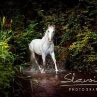 Кристиане Славик (Christiane Slawik)  - фото 13427729_1218190881547987_4396725337892263578_n-200x200, главная Фото , конный журнал EquiLIfe