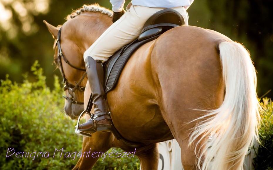 Навык уступки давлению у лошади. Как восстановить? - фото 1369421926_10, главная Тренинг , конный журнал EquiLIfe
