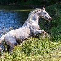 Кристиане Славик (Christiane Slawik)  - фото 1459670_1153448871355522_1518627097213202348_n-200x200, главная Фото , конный журнал EquiLIfe