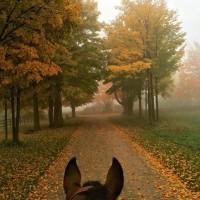 Мир между конских ушей  - фото 14657279_1084153538335395_6230706252802061802_n-200x200, главная Фото , конный журнал EquiLIfe