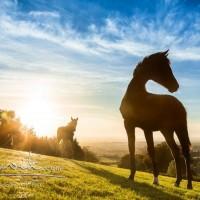Кристиане Славик (Christiane Slawik)  - фото 14680627_1325409887492752_7749470034305213857_n-200x200, главная Фото , конный журнал EquiLIfe
