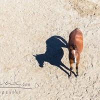 Кристиане Славик (Christiane Slawik)  - фото 15036539_1350514384982302_3814068431403121950_n-200x200, главная Фото , конный журнал EquiLIfe