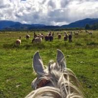 Мир между конских ушей  - фото 15894582_1163342853749796_5782437844502986104_n-200x200, главная Фото , конный журнал EquiLIfe