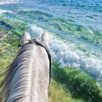 Мир между конских ушей  - фото 15940758_1165693066848108_1765234908717341427_n-200x200, главная Фото , конный журнал EquiLIfe