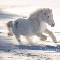 Кристиане Славик (Christiane Slawik)  - фото 16298982_1446135282086878_4214340056025419186_n-200x200, главная Фото , конный журнал EquiLIfe