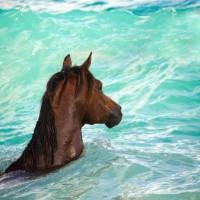 Кристиане Славик (Christiane Slawik)  - фото 16807110_1467045349995871_5198401943137616091_n-200x200, главная Фото , конный журнал EquiLIfe