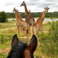 Мир между конских ушей  - фото 17309293_1229988010418613_4137543572451760246_n-200x200, главная Фото , конный журнал EquiLIfe