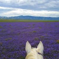 Мир между конских ушей  - фото 17883778_1255552037862210_1918591814279854562_n-200x200, главная Фото , конный журнал EquiLIfe