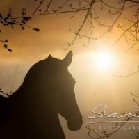 Кристиане Славик (Christiane Slawik)  - фото 18581755_1575639162469822_1749980613701317291_n-200x200, главная Фото , конный журнал EquiLIfe