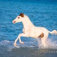 Кристиане Славик (Christiane Slawik)  - фото 1935476_1121222531244823_2577557510595390844_n-200x200, главная Фото , конный журнал EquiLIfe